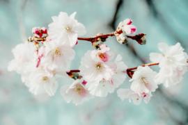 Blossom green - dubbel met envelop