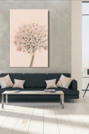 Allium Soft Creme - Alu Print