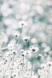 Flowers in the field - dubbel met envelop