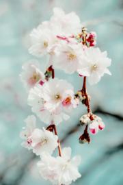 Blossom green - Kaart A5