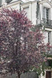 Paris - kaart A6