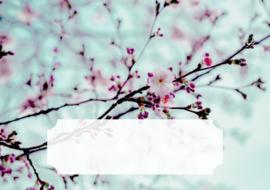 Set van 10 enveloppen - Spring
