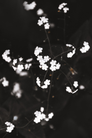 Little white flowers - Kaart A5