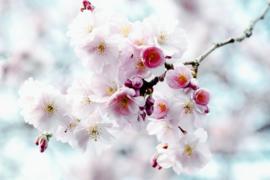 Blossom pink - dubbel met envelop