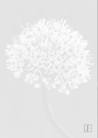 Allium Night Blue - Kaart A6
