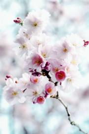 Blossom pink - Kaart A5