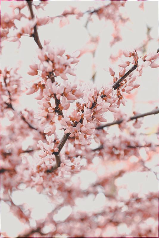 Little pink flowers - Kaart A5
