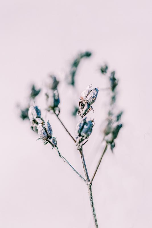 Flower Heart - Kaart A5