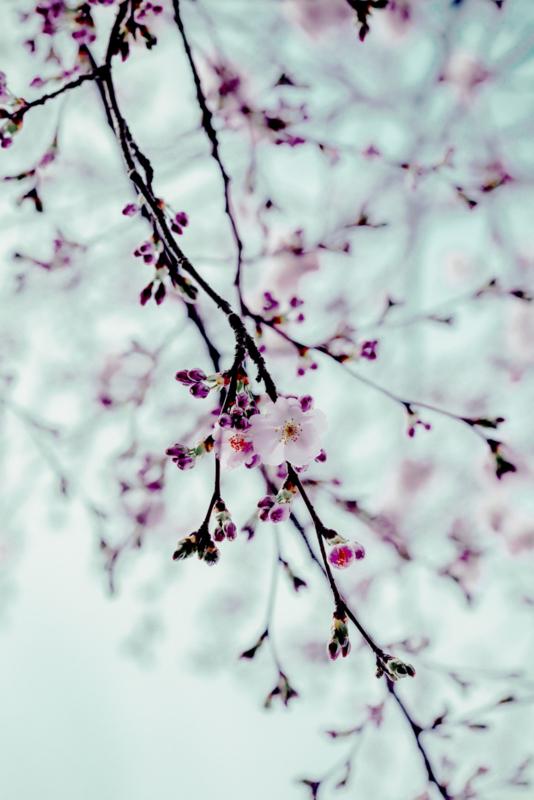 Blossom blue - Kaart A5