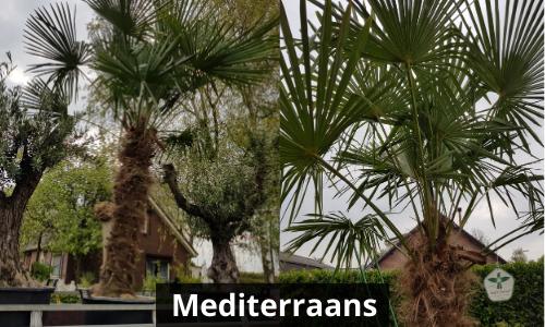 Mediterraans