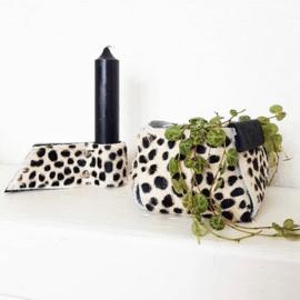 ❥ Bag dalmatiër