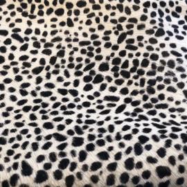 Squeeze  ❥ Dalmatiër