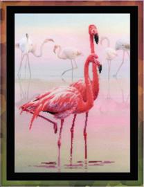 Riolis 'Flamingo'