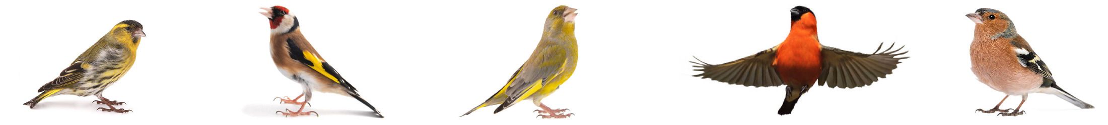 Wildzang vogels bodempapier