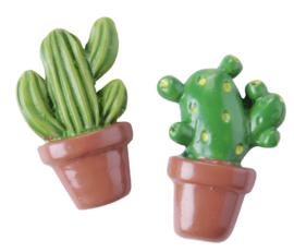Plak kaktus