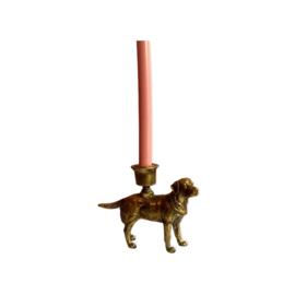 Kandelaar hond