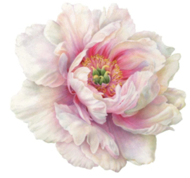 Placemat rose