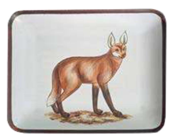 Little tray fox