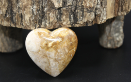 Hart van Koraal Fossiel 5 cm