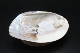 Parelmoeren schelp met parels 13-16 cm