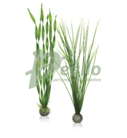 biOrb plantenset L groen
