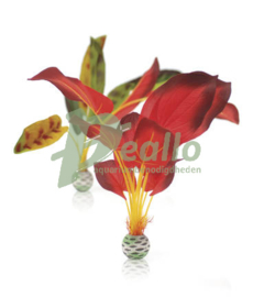 biOrb zijden plantenset L groen & rood