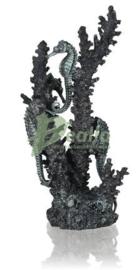 biOrb zeepaardjes zwart M