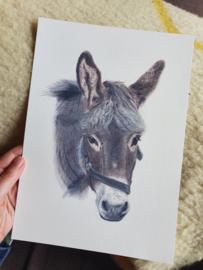 Print 20x30 A4, Klaas Jan de ezel
