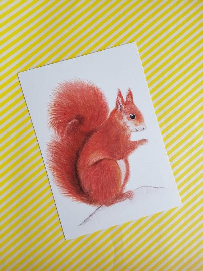 A6 enkele kaart eekhoorn