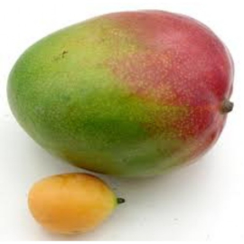 Bavarois Mango Abrikozen