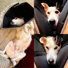 Comfy Cone hondenkraag