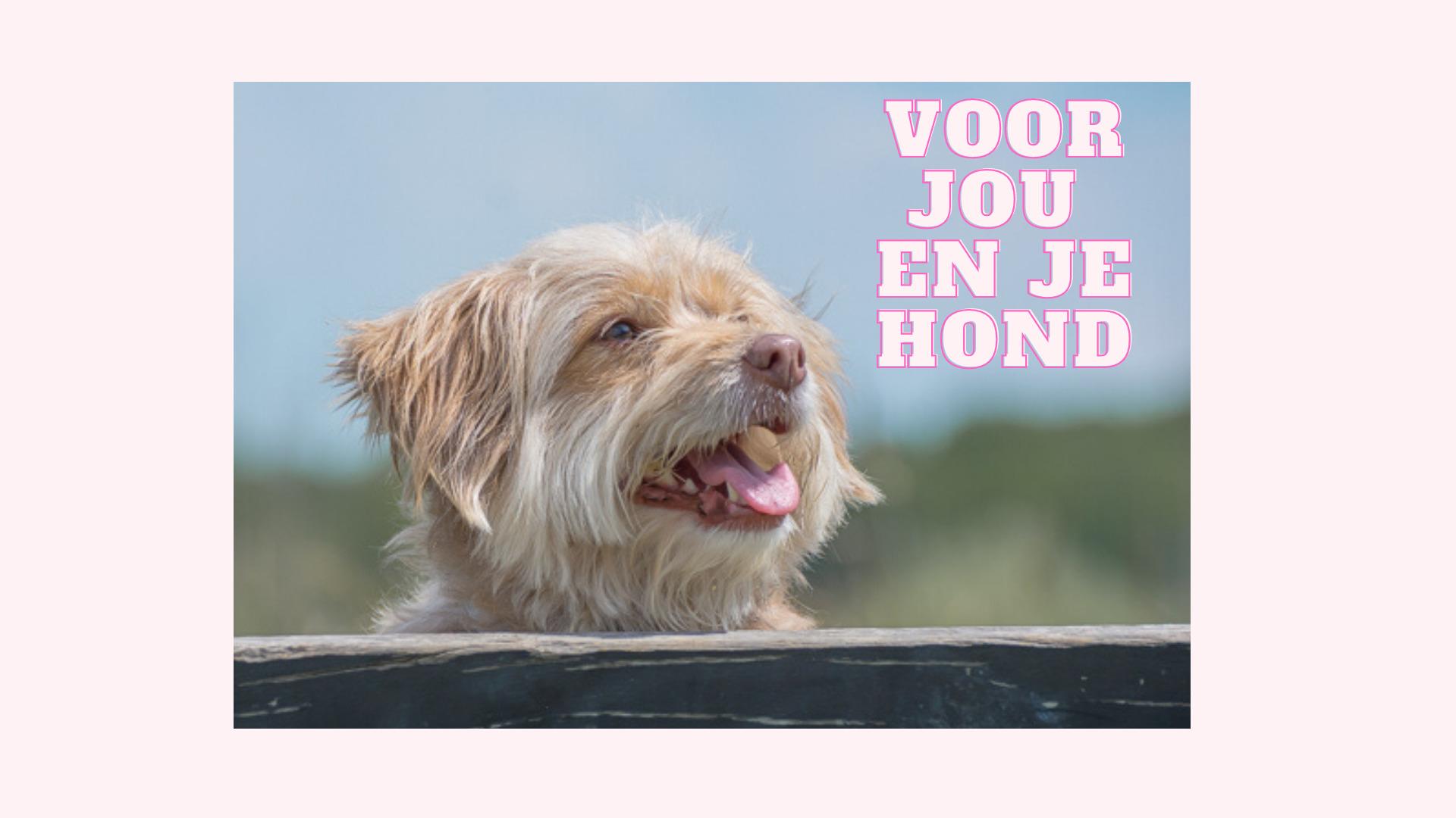 Voor jou en je hond