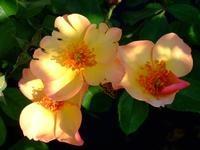 Seasons (Peach Nature)