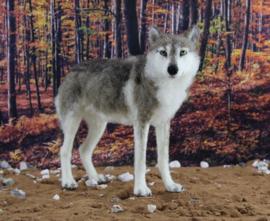 NaaldviltpakketWinston de wolf (engelstalig) per pakket