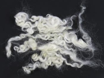 Wensleydale krullen natuurlijk wit