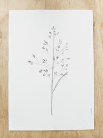 A4 poster grasspriet