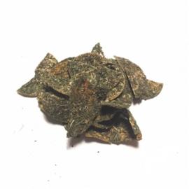 Berkenchips echinacea