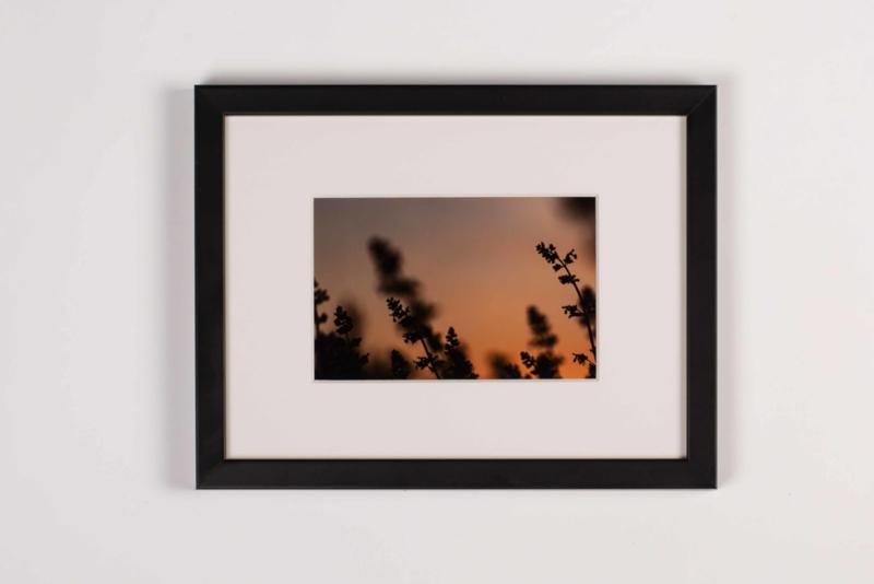 Nepeta Glow (kader 18 x 24 cm)