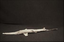 Zaagtandhaai 65 cm