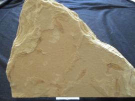 Fossielen Visjes