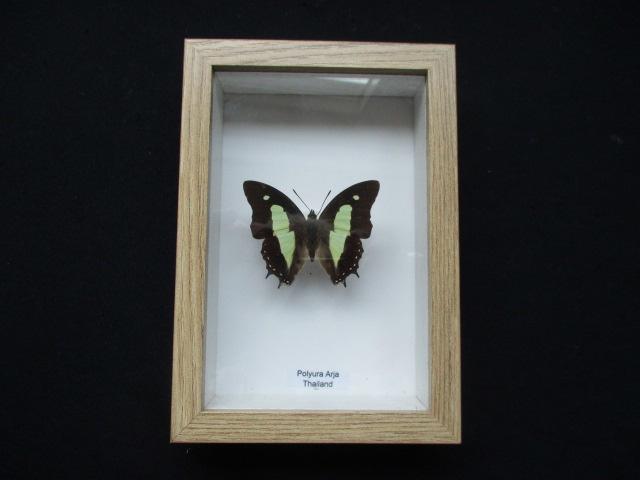 Vlinder in lijst b2
