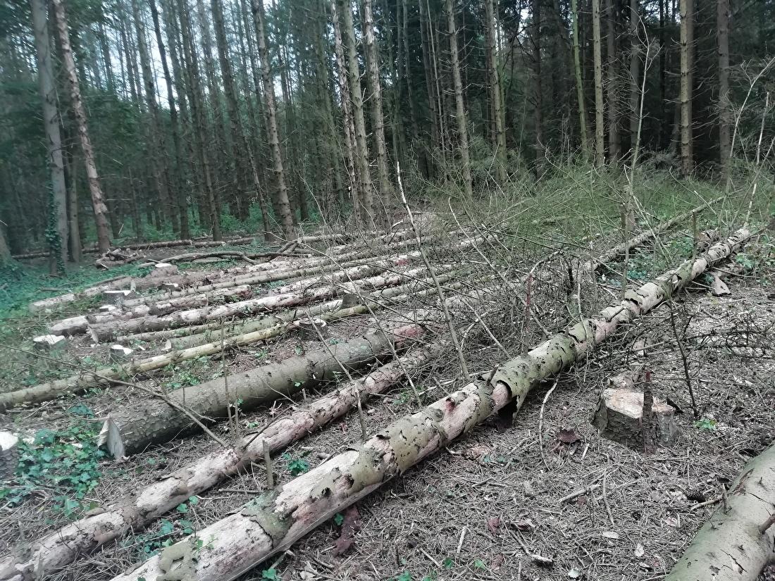 De volgende serie bomen omgezaagd samen met Rob