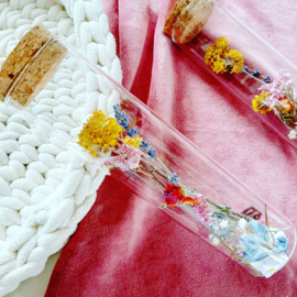 Dried flowers in a tube - Colourfull M