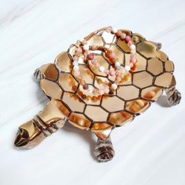 Schaaltje - Schildpad tortoise