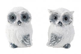 12 x Sneeuwuilen wit - H=7cm B=5cm - 2ass  KE5600