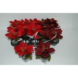 15 x Kerstster Rood met kluit hoog 15 cm .