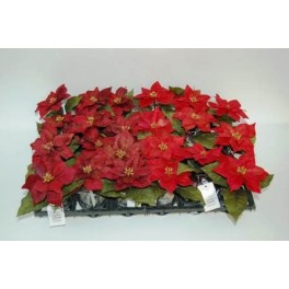 24 x kerstster rood met kluit h 12 cm