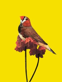 Vogel 10