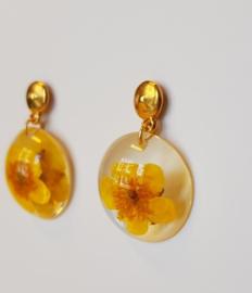Gouokleurige stekers met gele bloem (2)