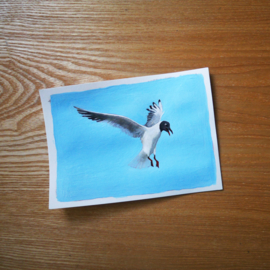 Black-headed gull gouache painting